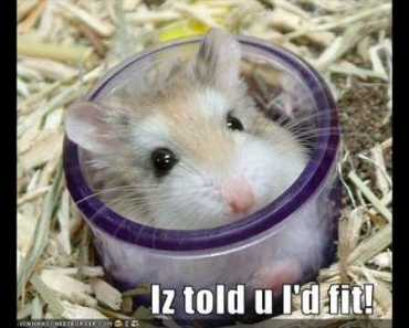 Funny and Cute Hamsters - funny and cute hamsters