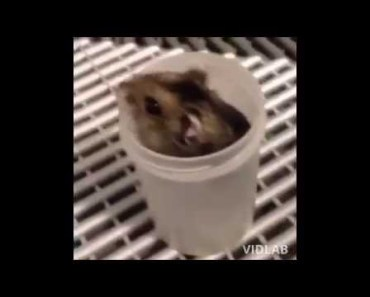 Funny cats and dogs | Funny Hamster Video Compilation 2015 | Hamster Fails | Funny Hamster Sleeping - funny cats and dogs funny hamster video compilation 2015 hamster fails funny hamster sleeping