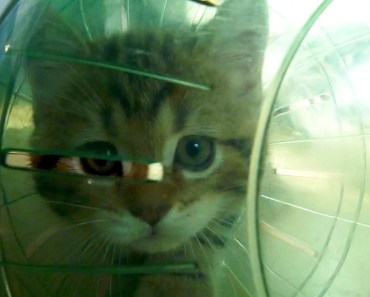 Funny Cats and Hamster Ball adventures - funny cats and hamster ball adventures