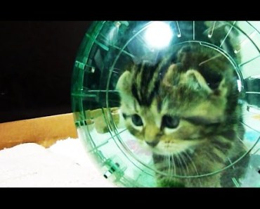 Funny Cats | Cute Kittens and spacecraft ( Kitten in Hamster Ball ) - funny cats cute kittens and spacecraft kitten in hamster ball