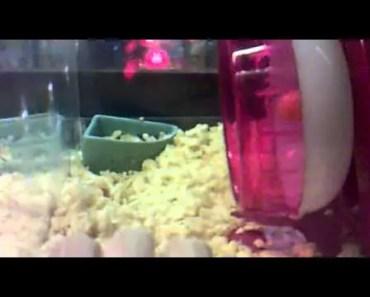 Funny flipping hamster - funny flipping hamster
