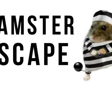 Funny hamster escape - funny hamster escape