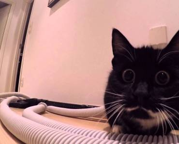 Funny hamster escapes and chases away cat. Will the hamster survive? - funny hamster escapes and chases away cat will the hamster survive