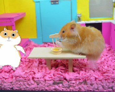 FUNNY! Hamster In A Camper! - Hamster Cage Tour! - The Cupcake HamHam Show! - funny hamster in a camper hamster cage tour the cupcake hamham show