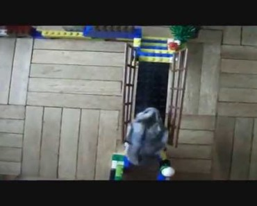 Funny hamster in an agility course. Obstacle course - funny hamster in an agility course obstacle course