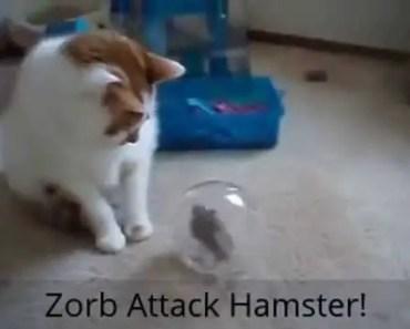 Funny Hamster Olympics - funny hamster olympics