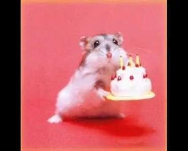 Funny Hamster Pictures - funny hamster pictures