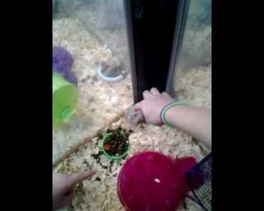 Girl gets bit by hamster funny - girl gets bit by hamster funny