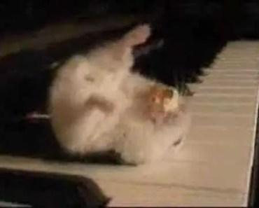 HAMSTER FUNNY - hamster funny