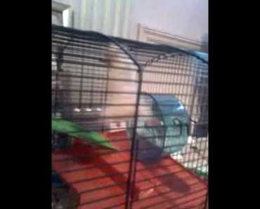 Hamster swinging from the ceiling/ climbing cage - funny!! - hamster swinging from the ceiling climbing cage funny