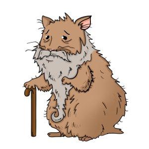 Hamster life span