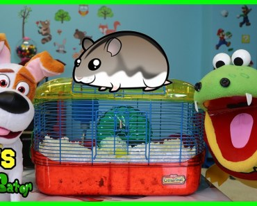 Kids Learn How to Take Care of pets dog and Hamster with Gus! Funny Video for Children - kids learn how to take care of pets dog and hamster with gus funny video for children