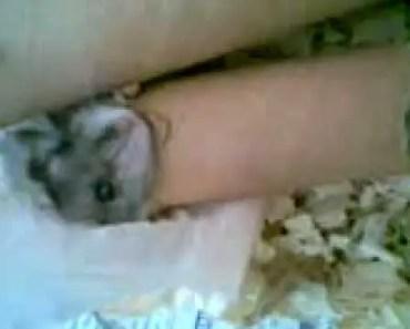 My funny hamster, Vilma - my funny hamster vilma