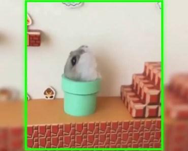 Super Mario Bros Hamster Edition | Funny Video - super mario bros hamster edition funny video