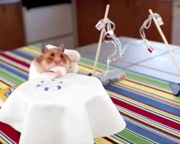 Tiny Hamster Eating Tiny Burrito is Adorably Funny - tiny hamster eating tiny burrito is adorably funny