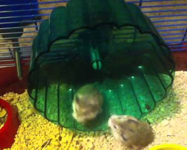 Very funny hamsters - very funny hamsters