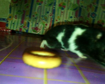 Funny Hamster - 1507040333 funny hamster