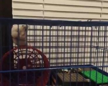 Funny hamster - 1507083693 funny hamster