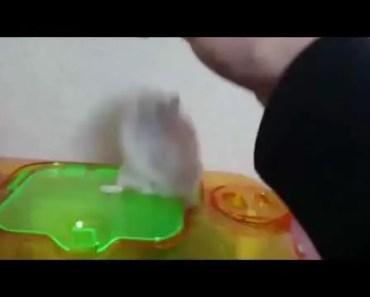 Funny hamster - 1507120639 funny hamster