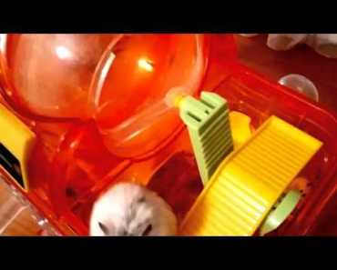 Funny hamster - 1507294546 funny hamster