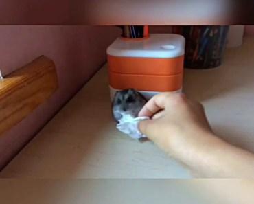 Funny hamster - 1507329809 funny hamster