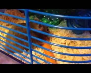 Funny hamster - 1508699829 funny hamster