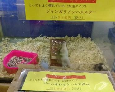 This hamster is broken! - 1508806985 this hamster is broken