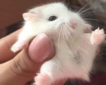Funny Hamster Compilation - 1508838657 funny hamster compilation