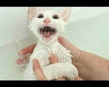 """Cats Saying """"No"""" to Bath - A Funny Cats In Water Compilation - cats saying no to bath a funny cats in water compilation"""