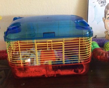 Chinchilla dancing with cute hamster times!!! - chinchilla dancing with cute hamster times