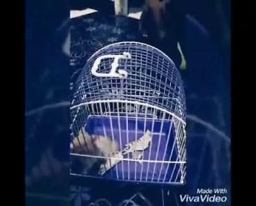 clever hamster - clever hamster