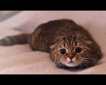 Cute cats feel guilty - Funny guilty cat compilation - cute cats feel guilty funny guilty cat compilation