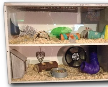 D.I.Y Hamster Cage IKEA Billy Cage - d i y hamster cage ikea billy cage