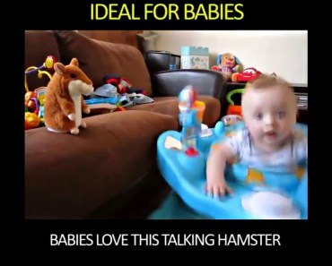 Funniest Gift Ever. Talking hamsters! - funniest gift ever talking hamsters