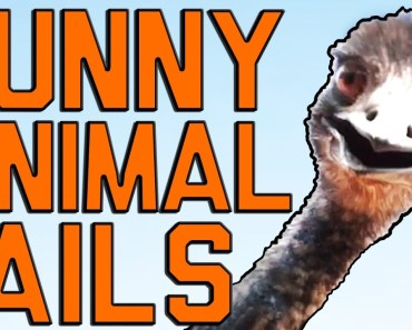 Funny Animal Fails: Just In Time For Election 2016 || Fail Army - funny animal fails just in time for election 2016 fail army
