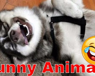 Funny Animals / Lustige Tiere zum totlachen / Fail Videos 2017 HD - funny animals lustige tiere zum totlachen fail videos 2017 hd
