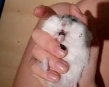 Funny Hamster Feeding - funny hamster feeding