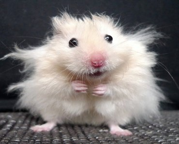 Funny Hamsters Compilation - funny hamsters compilation