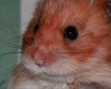 Funny hamsters - funny hamster video ! Part 7 - funny hamsters funny hamster video part 7