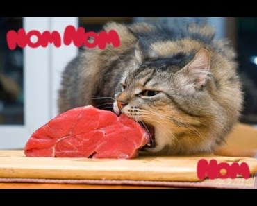 Funny Pets Making Weird Noises While Eating! - Hilarious Animals nom nom sound compilation - funny pets making weird noises while eating hilarious animals nom nom sound compilation