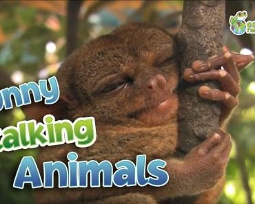 Funny Talking Animals - funny talking animals