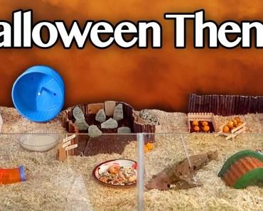 Halloween Hamster Cage Tour | #SpookSeason2016 - halloween hamster cage tour spookseason2016