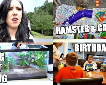 HAMSTER, CAT & PACMAN FROG NOT EATING | BIRTHDAY FUN | VLOG - hamster cat pacman frog not eating birthday fun vlog