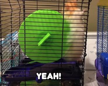 Hamster Doing A Loop De Loop - NatGeo Kids! - hamster doing a loop de loop natgeo kids
