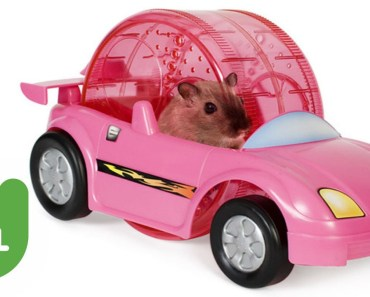 Hamster Drag Racing - hamster drag racing