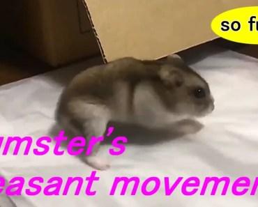 Hamster Sliding On Plastic bag!! - Funny Animals - hamster sliding on plastic bag funny animals
