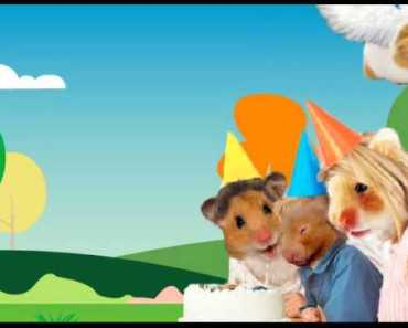 Happy Birthday - The Hamster Way - happy birthday the hamster way