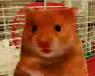 Harry the Hamster and friends compilation of naughty swearing talking animals - harry the hamster and friends compilation of naughty swearing talking animals