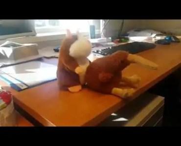 Horny Mr Hamster - Lazy weekend - horny mr hamster lazy weekend