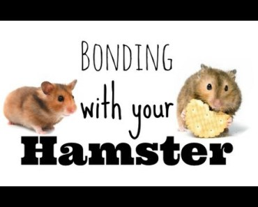 How to bond with your hamster - how to bond with your hamster